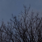 trees-and-moon-2