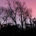 web-sunrise-scotland-2